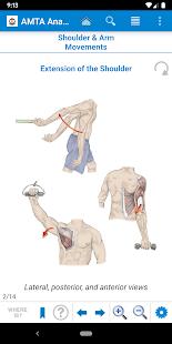 AMTA Anatomy