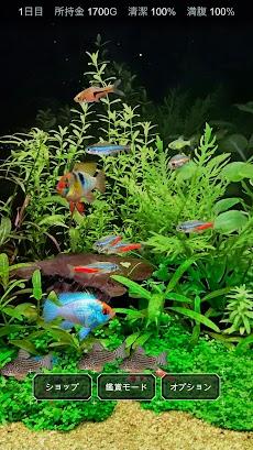 熱帯魚育成「ミニアクア」癒しのアクアリウム体験のおすすめ画像3