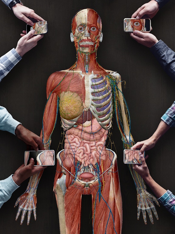 Human Anatomy Atlas 2021: Complete 3D Human Body  poster 14