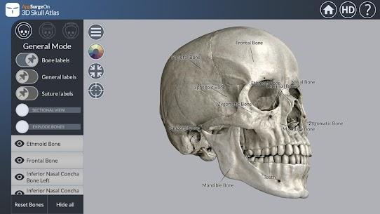 3D Skull Atlas 1