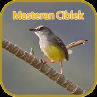 Masteran Ciblek Ngebren Gacor Offline Download Apk Free For Android Apktume Com