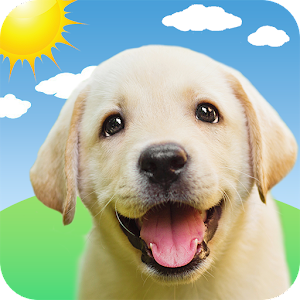 Weather Puppy  App &amp Widget Weather Forecast