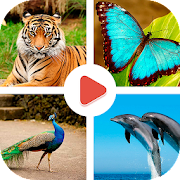 Animals Learning - Animals for Kids