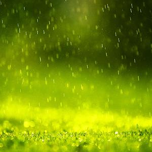 Rain Live Wallpaper