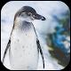 Penguin wallpapers Download on Windows