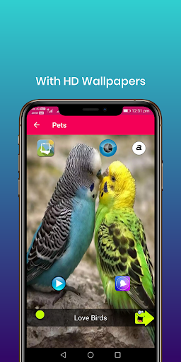 100 bird sounds : ringtones, wallpapers screenshot 2