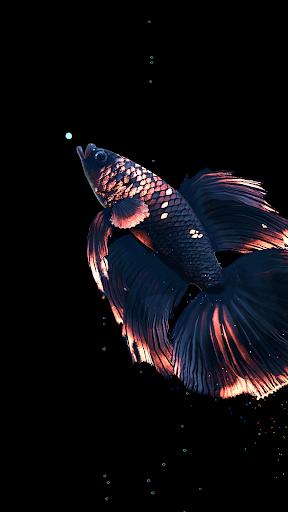 Betta Fish Live Wallpaper FREE 1.4 Screenshots 21