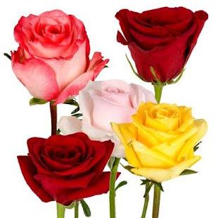Good morning Flower Wallpapers Colorful Roses 4K 12.1.6 Screenshots 5