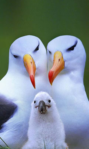 Albatross Live Wallpaper Pro For PC Windows (7, 8, 10, 10X) & Mac Computer Image Number- 6