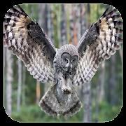 Flying Owl Live Wallpaper