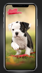 puppies wallpapers FHD 4K 2021 .APK Preview 8