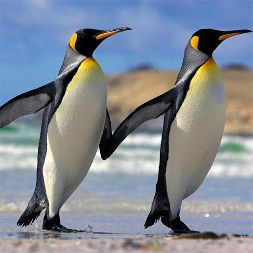 Penguins Jigsaw Puzzles apkdebit screenshots 8