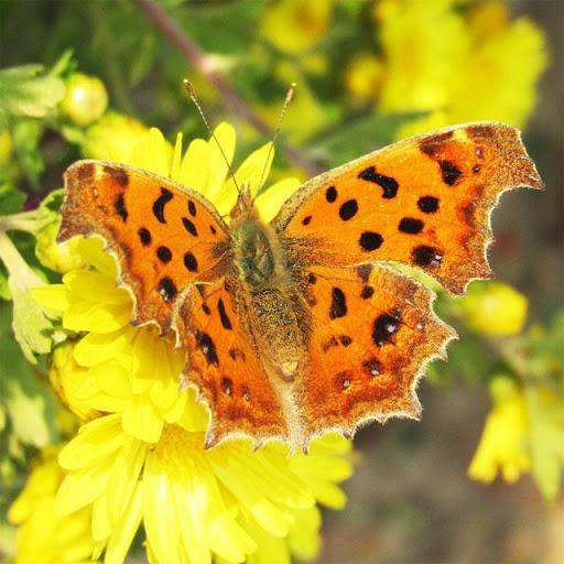 Butterflies Jigsaw Puzzles screenshots 9