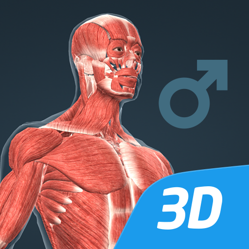 Baixar Human body (male) educational VR 3D para Android