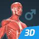 人体 (男)インタラクティブな教育用3D