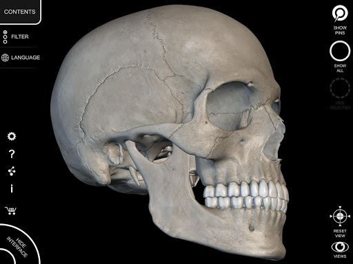 Skeleton   3D Anatomy 2.5.3 Screenshots 11
