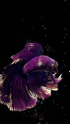 Betta Fish Live Wallpaper FREE screen 2