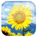 Sunflower Live Wallpaper APK