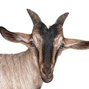 My Goat Manager - Goat farming app