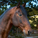 Horses Jigsaw Puzzles Collection