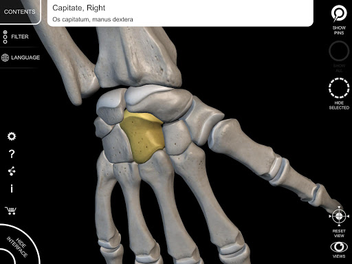 Skeleton   3D Anatomy 2.5.3 Screenshots 10