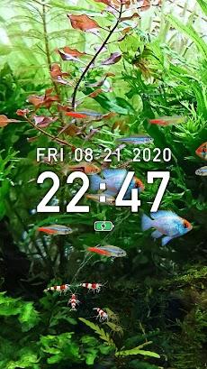 熱帯魚育成「ミニアクア」癒しのアクアリウム体験のおすすめ画像4