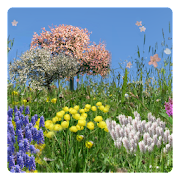 Spring Flowers Free Wallpaper