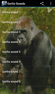 Gorilla Sounds  Apps For Pc (Windows 7, 8, 10 And Mac) Free Download 2