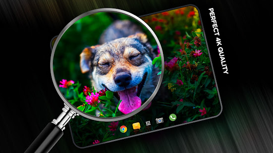 Wallpapers with Animals themes in 4K