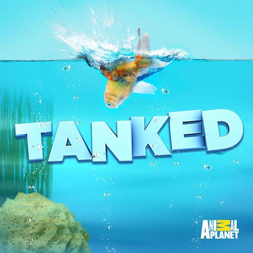 Fish Tank Kings Tv On Google Play