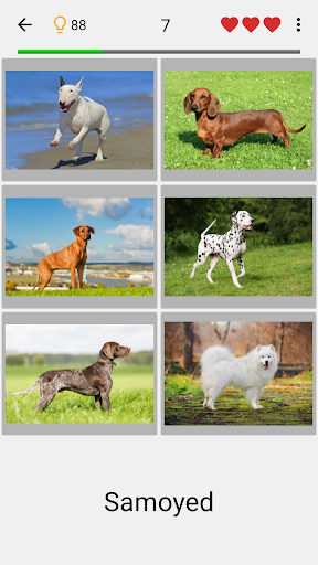 Dogs Quiz - Guess Popular Dog Breeds in the Photos 3.2.2 screenshots 1