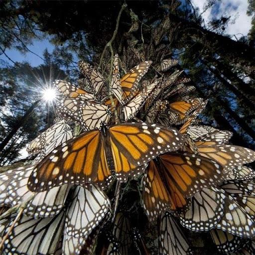 Butterflies Jigsaw Puzzles screenshots 4