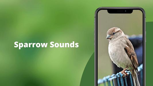 Sparrow Sounds - Sparrow Calls Ringtone 1.1
