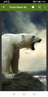 Polar bear Wallpapers 1.0 APK + Mod (Unlimited money) إلى عن على ذكري المظهر