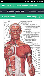 Muscle Anatomy Reference Guide For Pc – Free Download On Windows 10, 8, 7 2