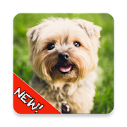 Cute Dogs Memory Matching Game