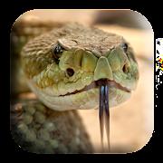 Rattlesnake Sounds