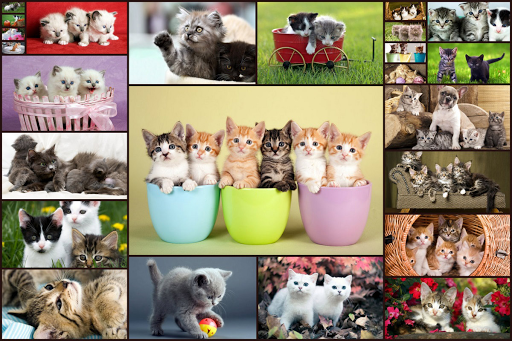Cats Jigsaw Puzzles Games - For Kids & Adults ud83dude3aud83eudde9 screenshots 1