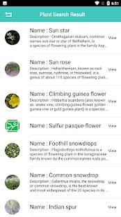 Plant Identification - Plant, Leaf, Flower