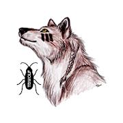 TB Wolf
