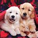 子犬 ライブ壁紙 – 可愛い子犬 - Androidアプリ