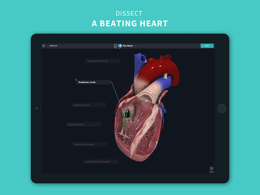 Complete Anatomy u201821 - 3D Human Body Atlas 6.4.0 Screenshots 14