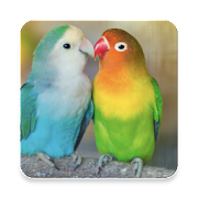 Lovebird Sound Collections ~ Sclip.app