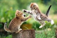 猫のジグソーパズルのおすすめ画像3