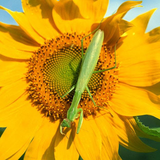 Insects Jigsaw Puzzles apkdebit screenshots 6
