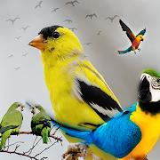طير لهواة تربية الطيور المغردة والناطقة