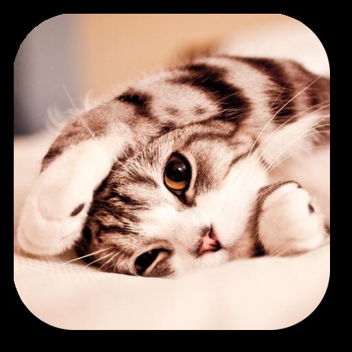 Lazy Cat Live Wallpaper