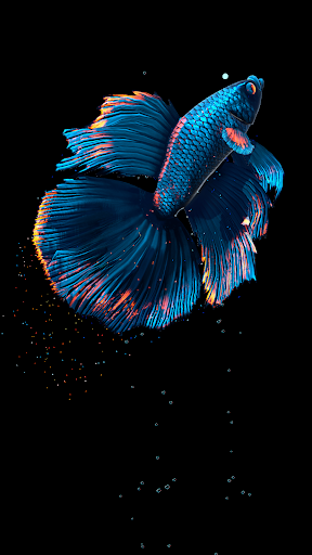 Betta Fish Live Wallpaper FREE 1.4 Screenshots 13
