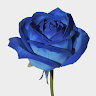 Blue rose flower magic 1980 game apk icon