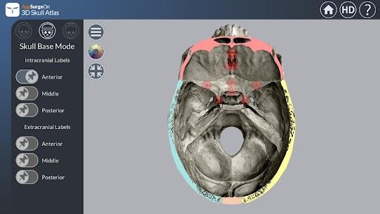 3D Skull Atlas 3